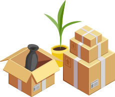 Two boxes and a plant
